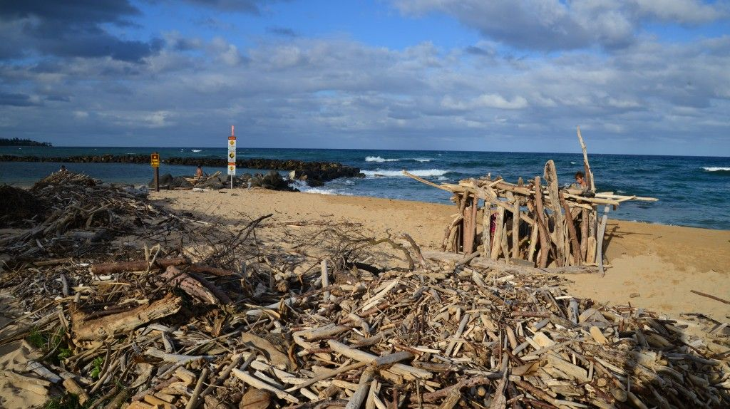 Lydgate Beach driftwood