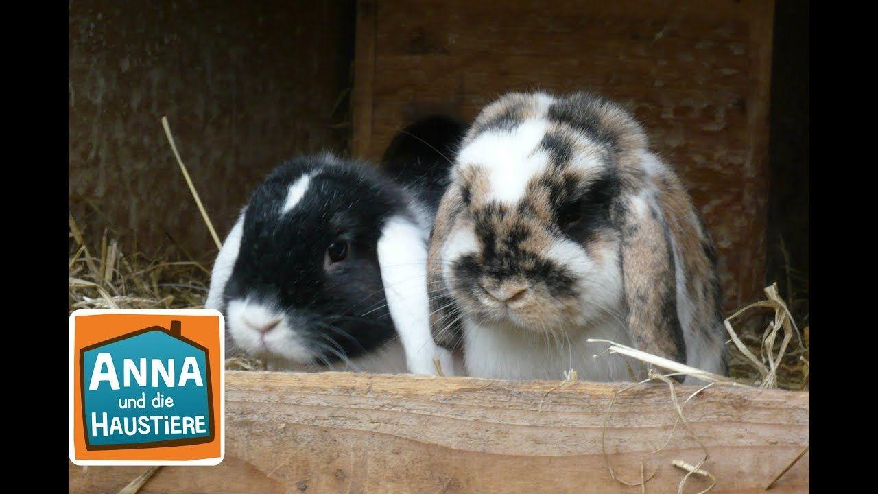 Kaninchen Reportage Fur Kinder Anna Und Die Haustiere