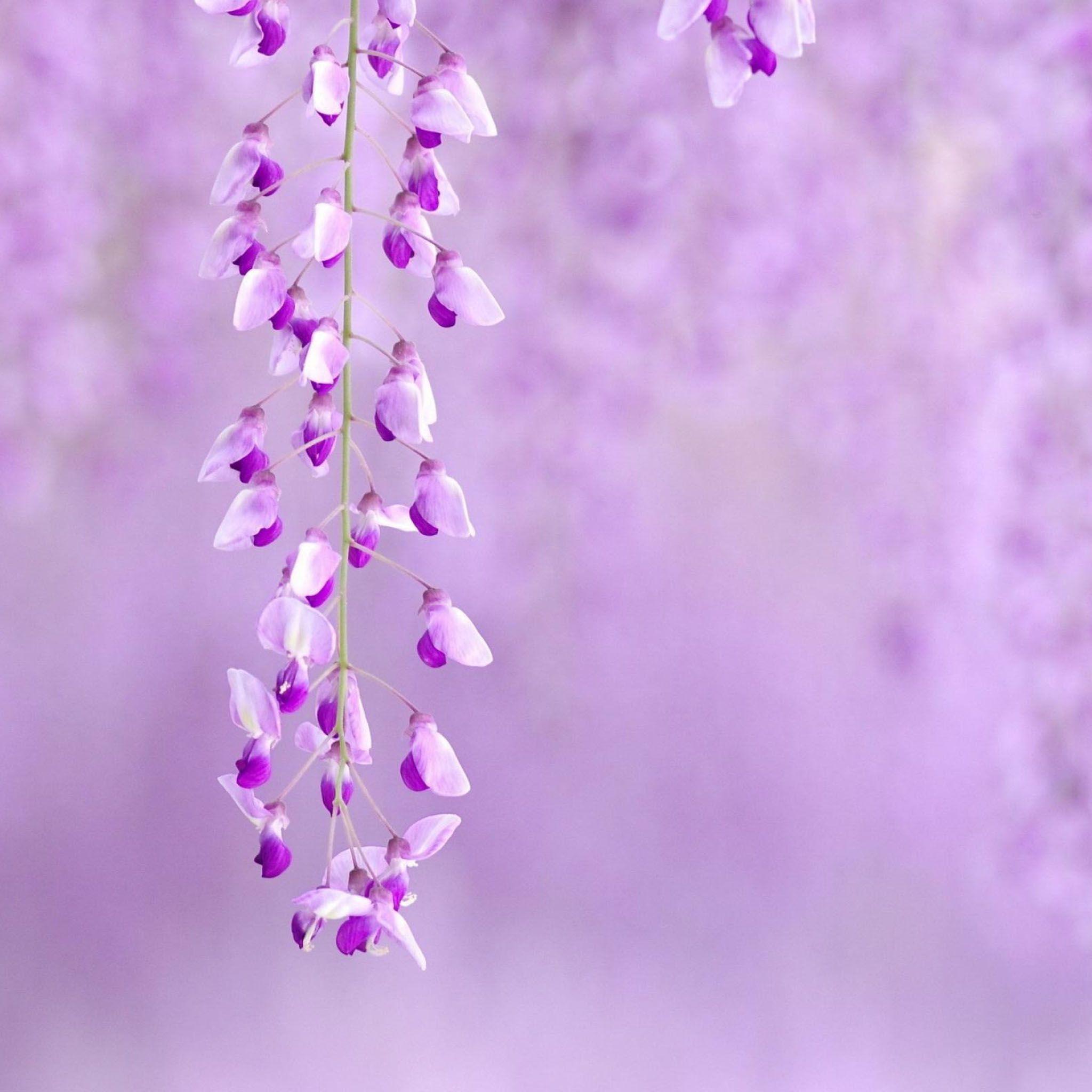 Free Ppt Backgrounds Desktop Wallpaper Flower Pink Lotus: Pin By Art On Visualosities