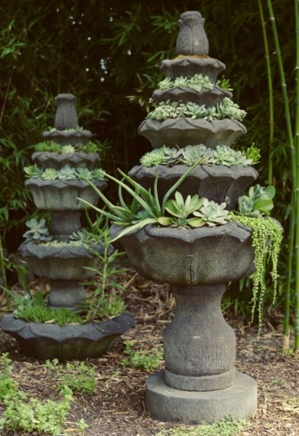 Beautiful, just beautiful. Old bird bath fountains turned in to beautiful Succulent planters.