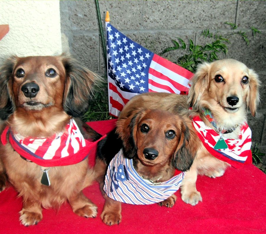 Image result for presidents day dachshunds