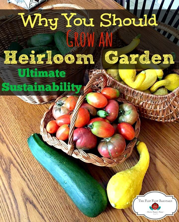 Urban Vegetable Gardening For Beginners: Why You Should Grow An Heirloom Garden