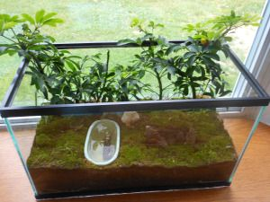 make a terrarium..for plants or your salamander Petunia like Allison at A Farm Girl's Life online blog did