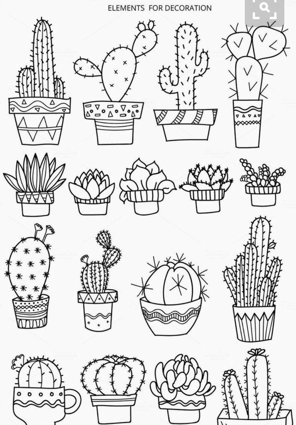 Cacti And Succulents Doodles Drawings In Pencil