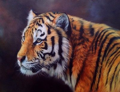 TIGER  New DAVID STRIBBLING Oil Painting
