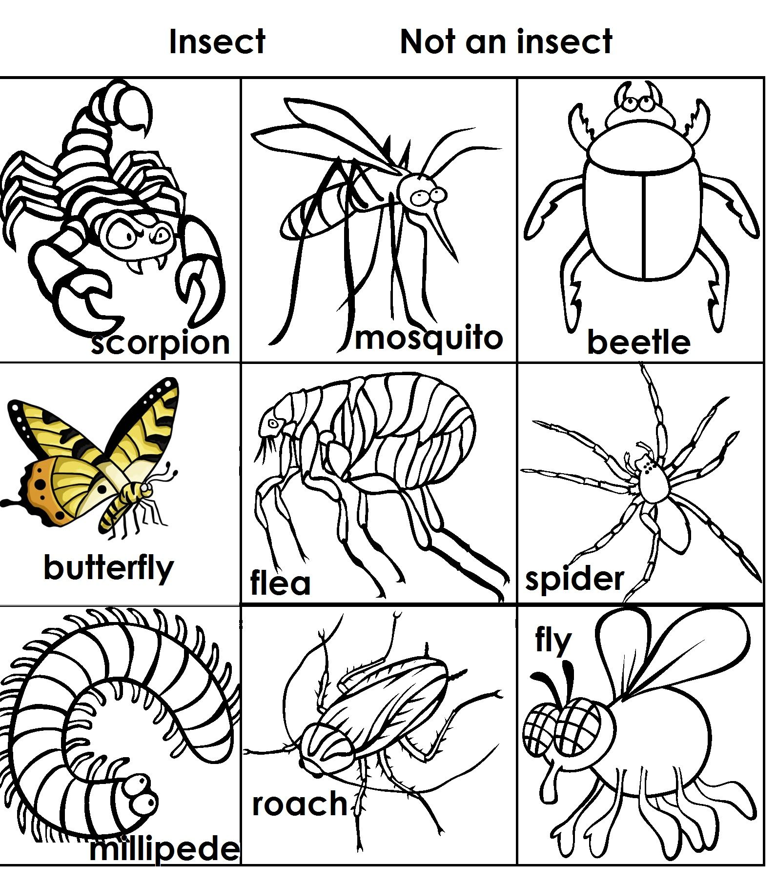 Insect Not Insect Sort