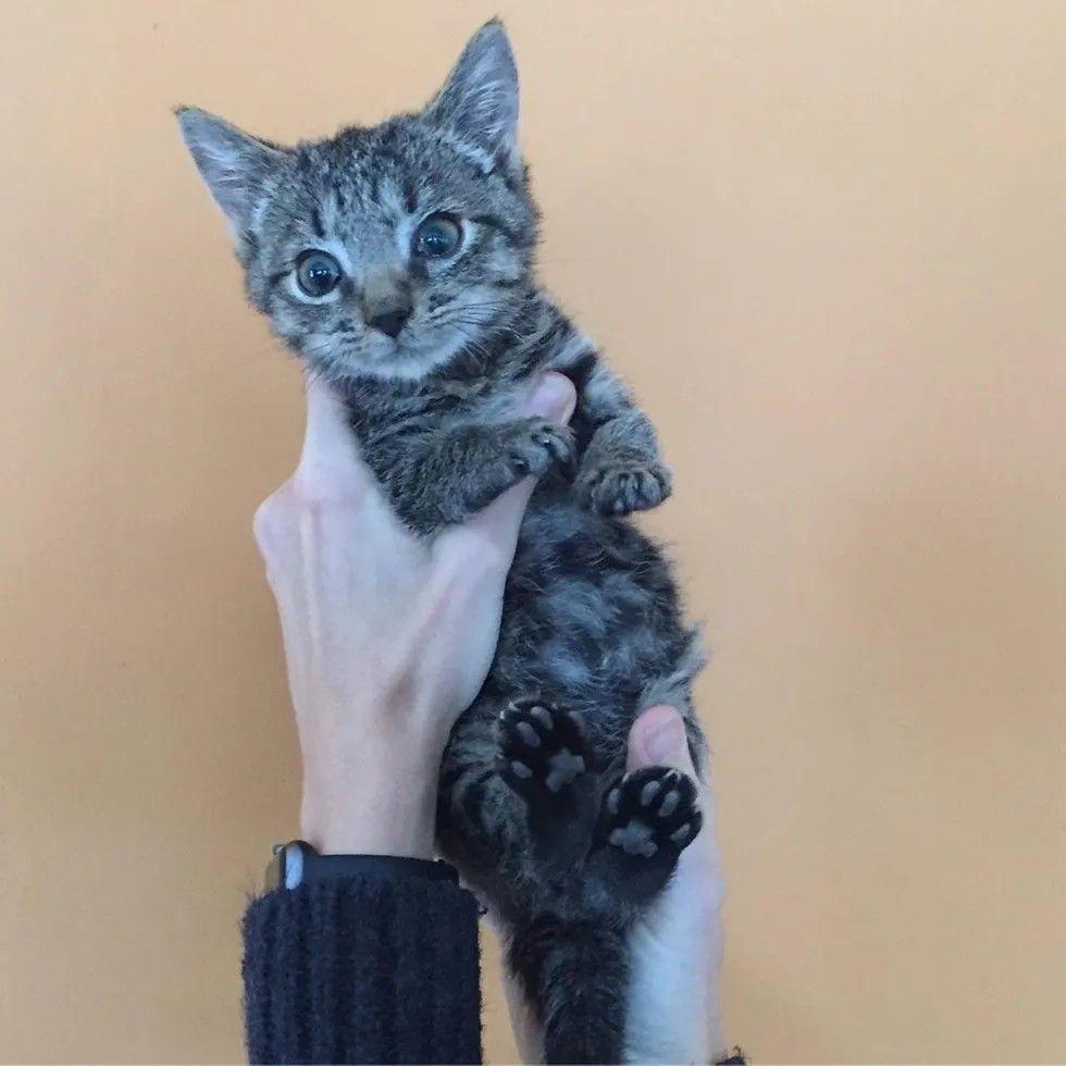 Pin By Nunui Sunshine On Project To Love In 2020 Kitten Rescue Tiny Kitten