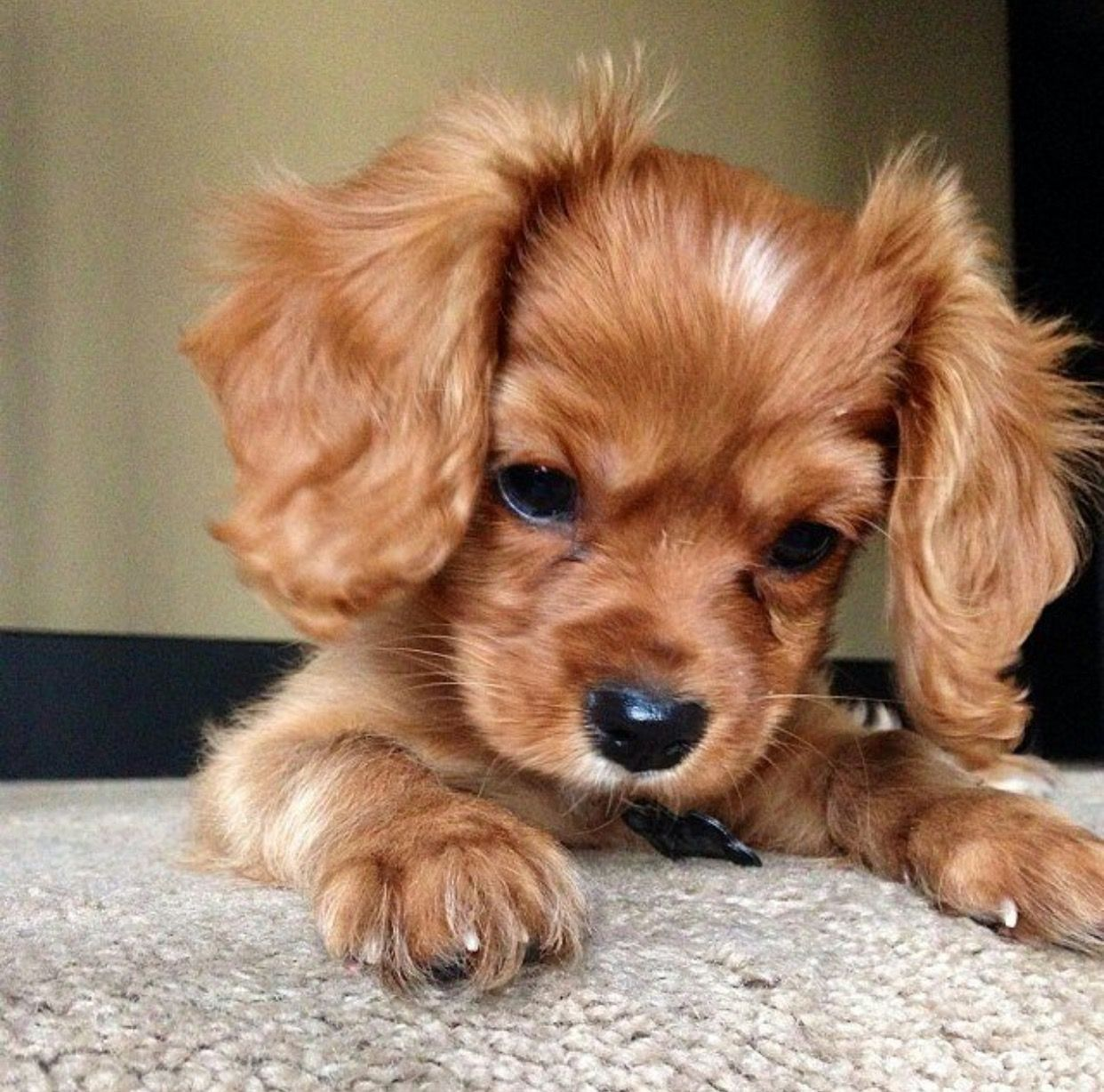 Dog Puppy Cute Pets Cute Animals Puppies