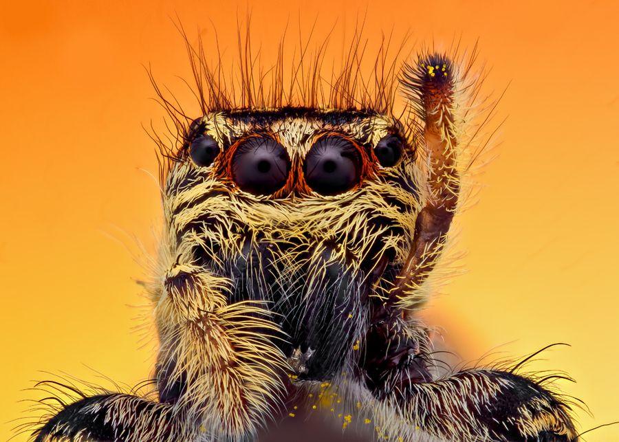 Hello #spider #arachnid #invertebrate   Macro photography ...