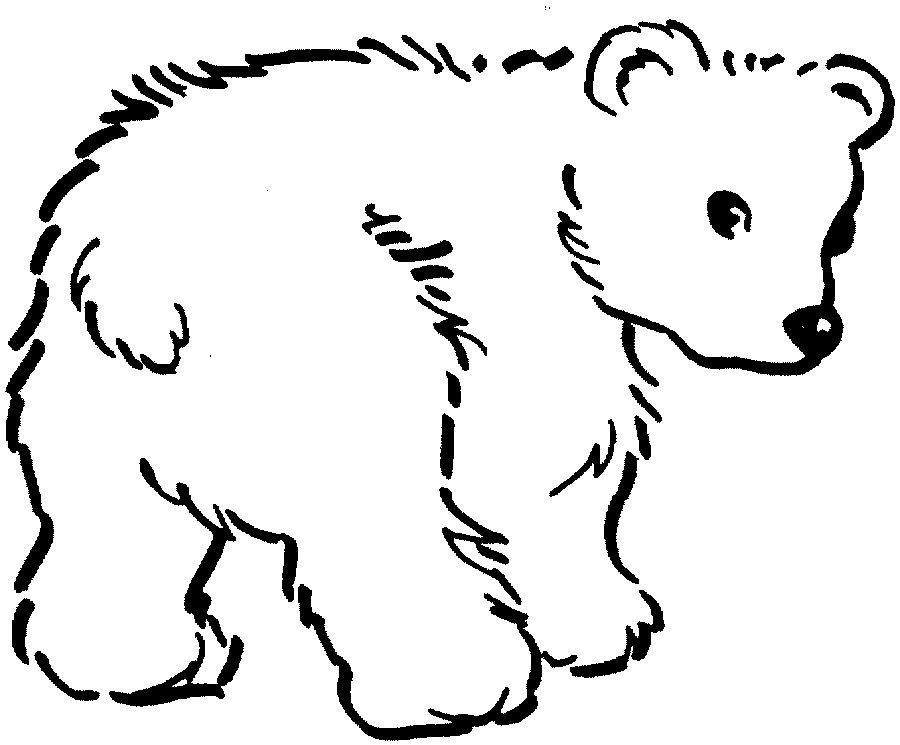 Imagens De Animais Selvagens Para Colorir 2 Com Imagens