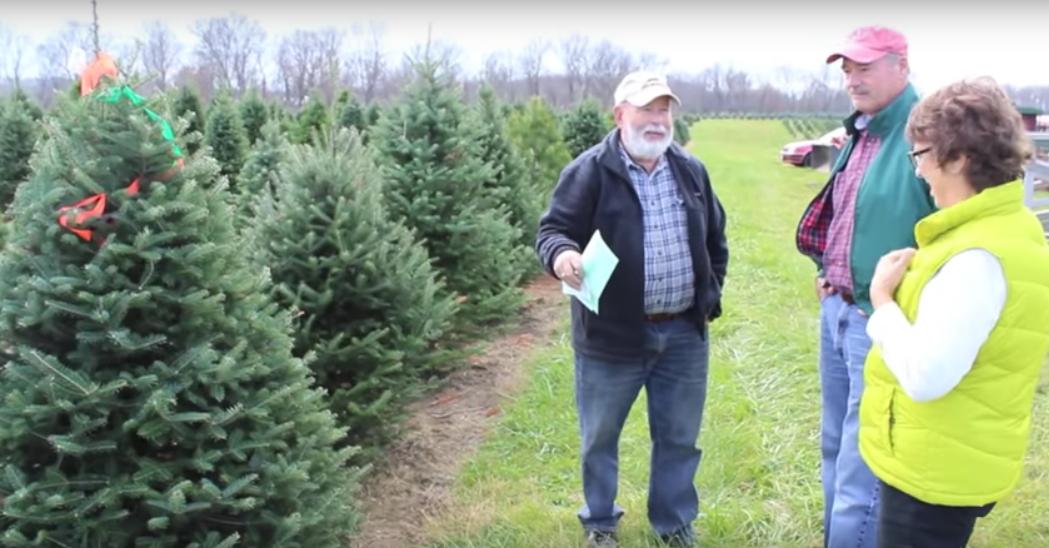 Dush Family Has Made Pine Tree Barn A Christmas Tree Destination Christmas Tree Pine Tree Tree