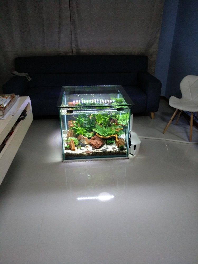 Singapore S One And Only Coffeetable Aquarium This Is 2019 Decor