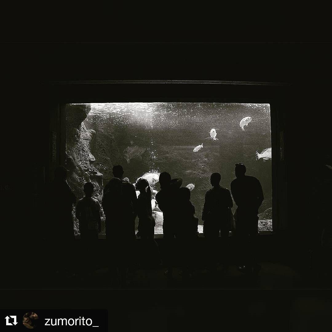 #Repost @zumorito_ with @repostapp ・・・ #cretaquarium  #Cretaquarium #myhersonissos #heraklion #gouves