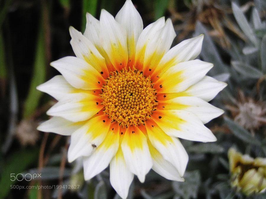 Flor by fotoencanarias