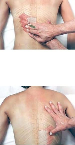 Grundlæggende Clinical Massage Therapy - serratus posterior-8663