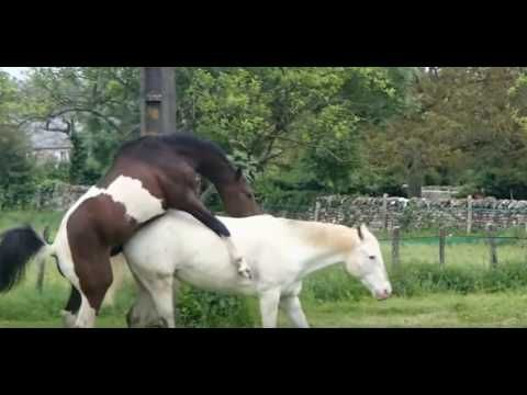 Fully Natural Horse Mating Scene No Human Intervention Horse Mate Horse Videos Horses Horses mating | horses breeding is a video brought to you by our channel mating do watch out other. fully natural horse mating scene no