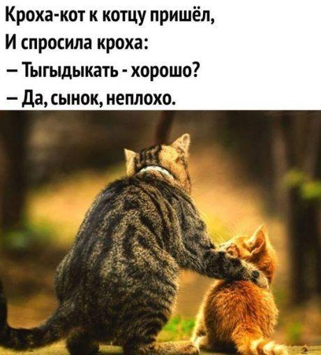 Вязание. Полезные советы | Факты о кошках, Смешно ...