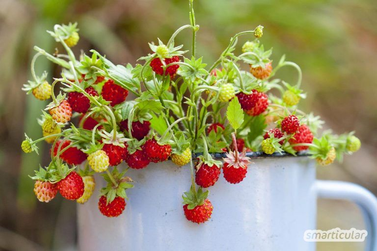 Kräuter im Blumenkasten: So wird jeder Balkon zum Kräutergarten