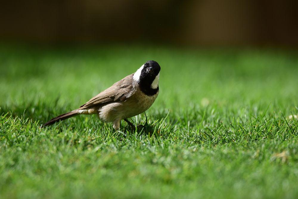 صوت البلبل اجمل انغام الطبيعة قائمة منوعة لتغريده طيور العرب My Pictures Pictures You Take