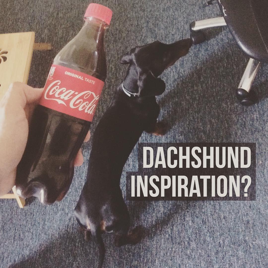 Dachshund inspiration? #dachshund #dachshundsofinstagram #jazavicar #carli #coke #cocacola