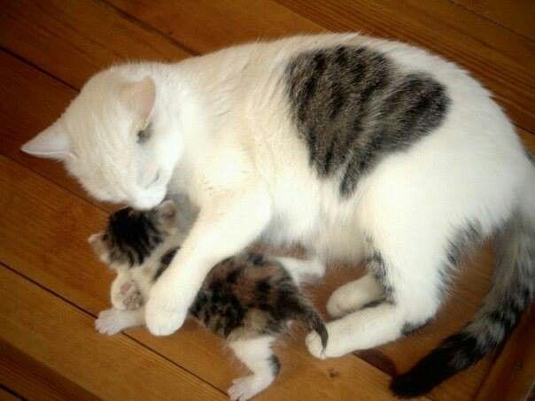 Mommy lovely