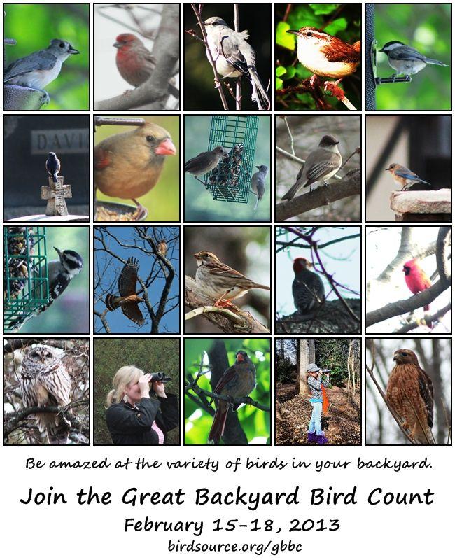 The Great Backyard Bird Count Starts Friday Feb 15