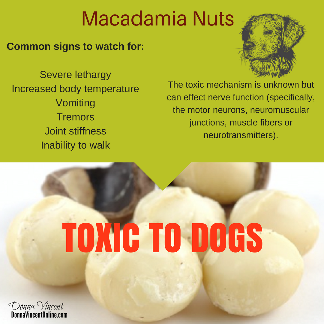 Macadamia Nuts Can Be Toxic To Your Dogs If Your Dog Ingests Macadamia Nuts And You Notice Symptoms Call Animal Neuromuscular Stiff Joints Neurotransmitters