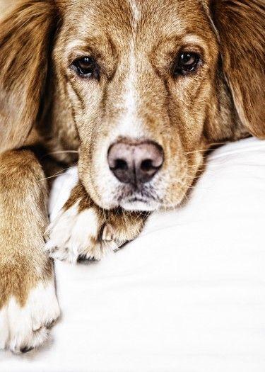 Awesome Dog Art Dog Paintings Dog Portraits