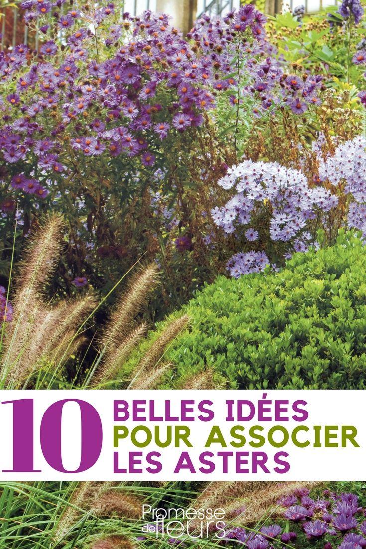10 id es pour associer les asters vivace le jardin et. Black Bedroom Furniture Sets. Home Design Ideas