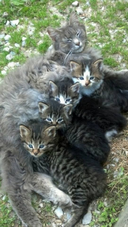 Mom Cat Deese Oinkers Should Beez Weaned Already I Figures Let Em Drains Meez Dry Den Dey Ll Haz To Drink On Der O With Images Kittens Cutest Cats Pretty Cats