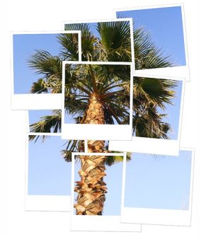 Why palm trees are the dorks of mother nature ...read more at the blog.  from: Aubreys/642