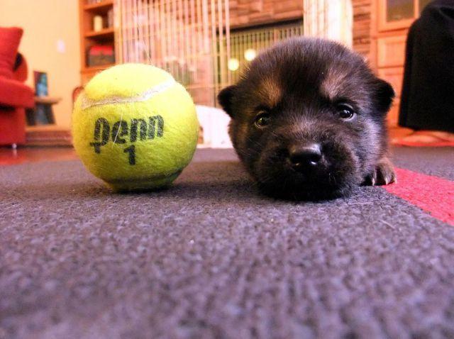 Throw the ball?