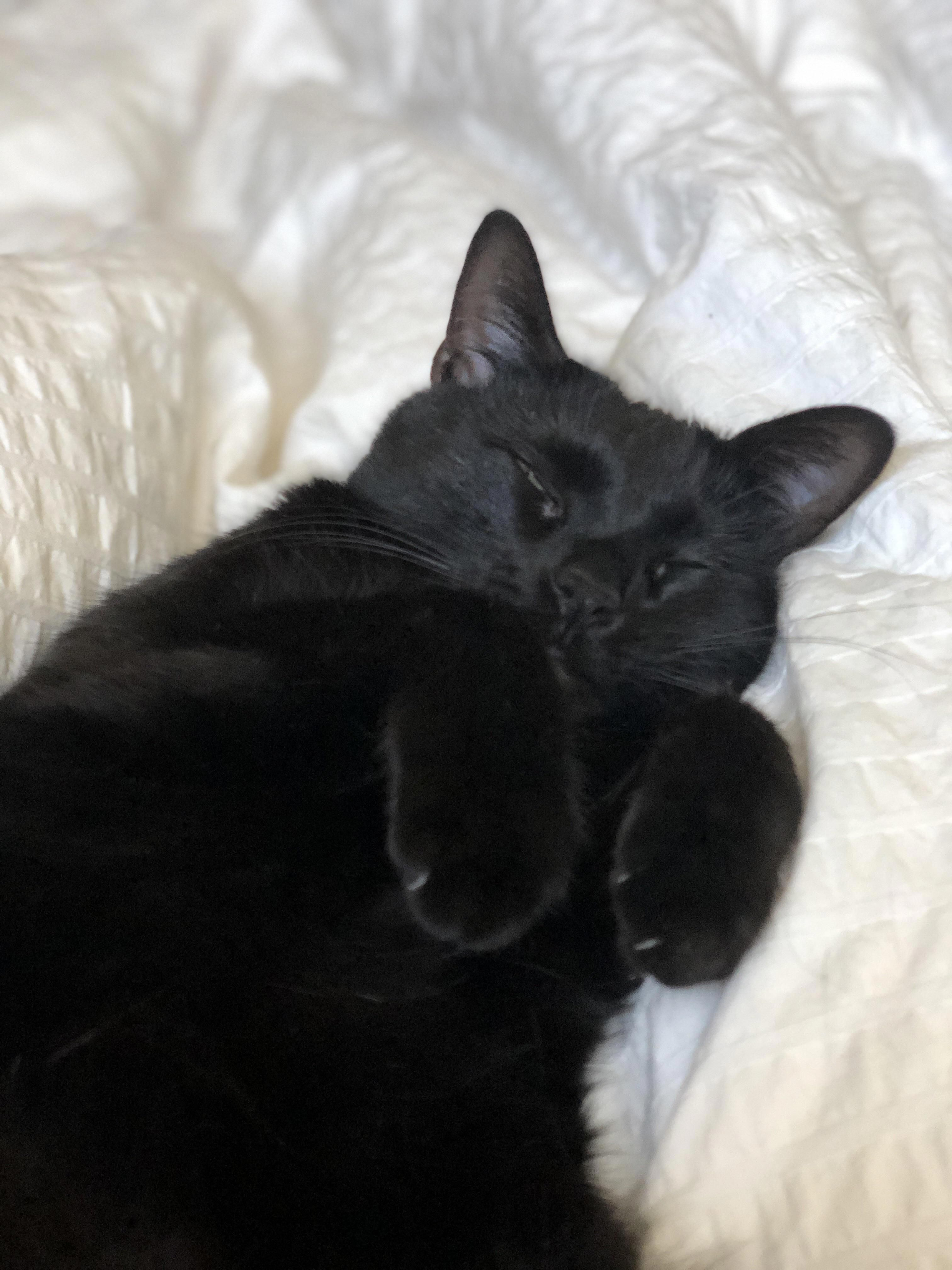 She Sleeps Like This In My Arms Every Single Night How Did I Get So Lucky This Is My Sweet Girl Fortune Teelast Com Cats Cute Animals Crazy Cats