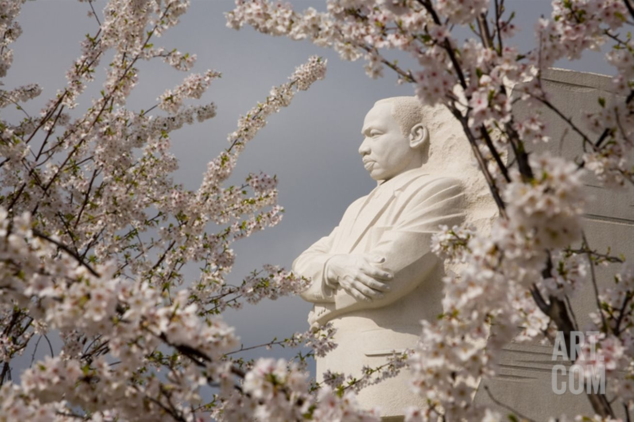 Cherry Blossoms Frame the Marble Statue of Martin Luther King Photographic Print by Stephen St. John at Art.com