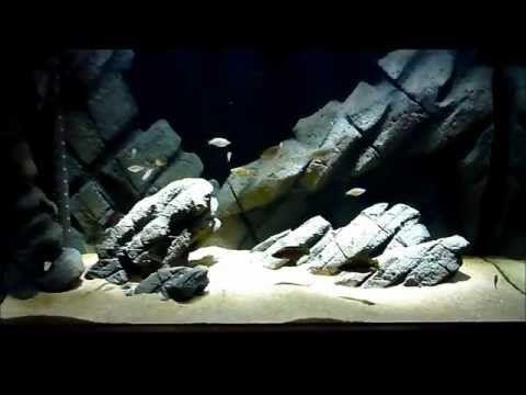 65g Tanganyikan Diy Rockscape Diy Fish Tank Aquascape Aquarium