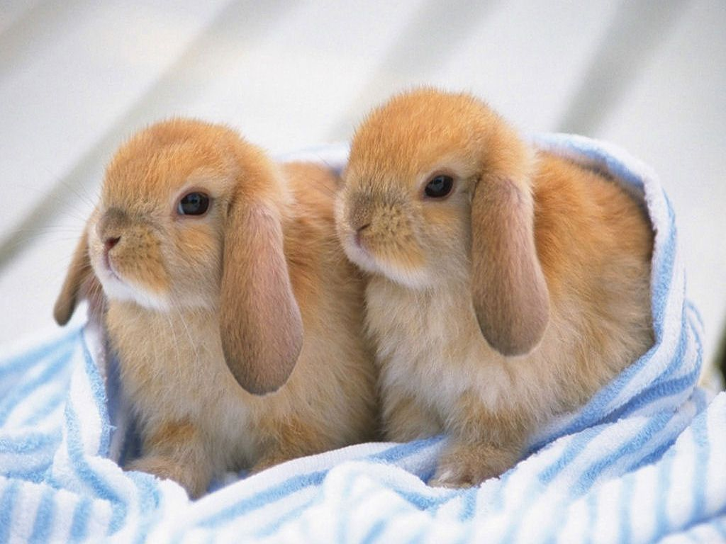 Cute Rabbits Wallpapers Cute Baby Bunnies Cute Baby Animals
