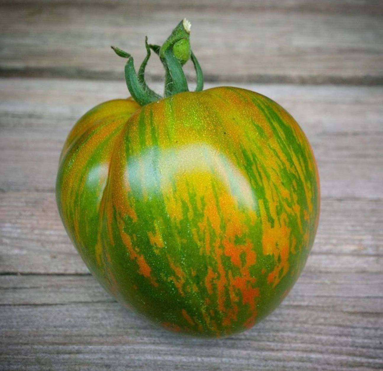 10 Seeds Tomato Vegetable Green Envy
