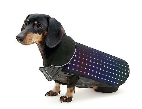 Un chaleco para perros, que los dueños techies adorarán | Pocas pulgas - Yahoo Mujer
