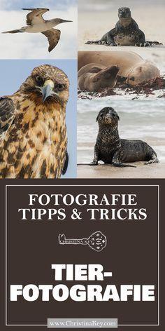 Naturfotografie – Tipps und Tricks für bessere Aufnahmen – Kreative Fotografie Tipps und Foto Hacks