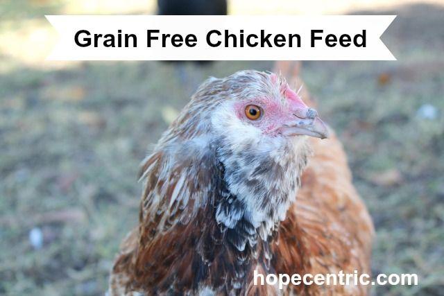 GF chicken  feed