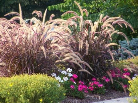 sun landscaping ideas This flower garden design includes both