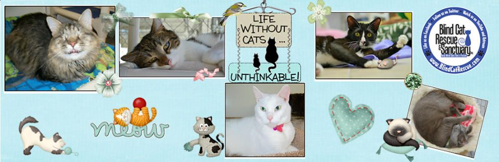 Pin by Linda Adamca on animal abuse Cat rescue, Cats, Rescue