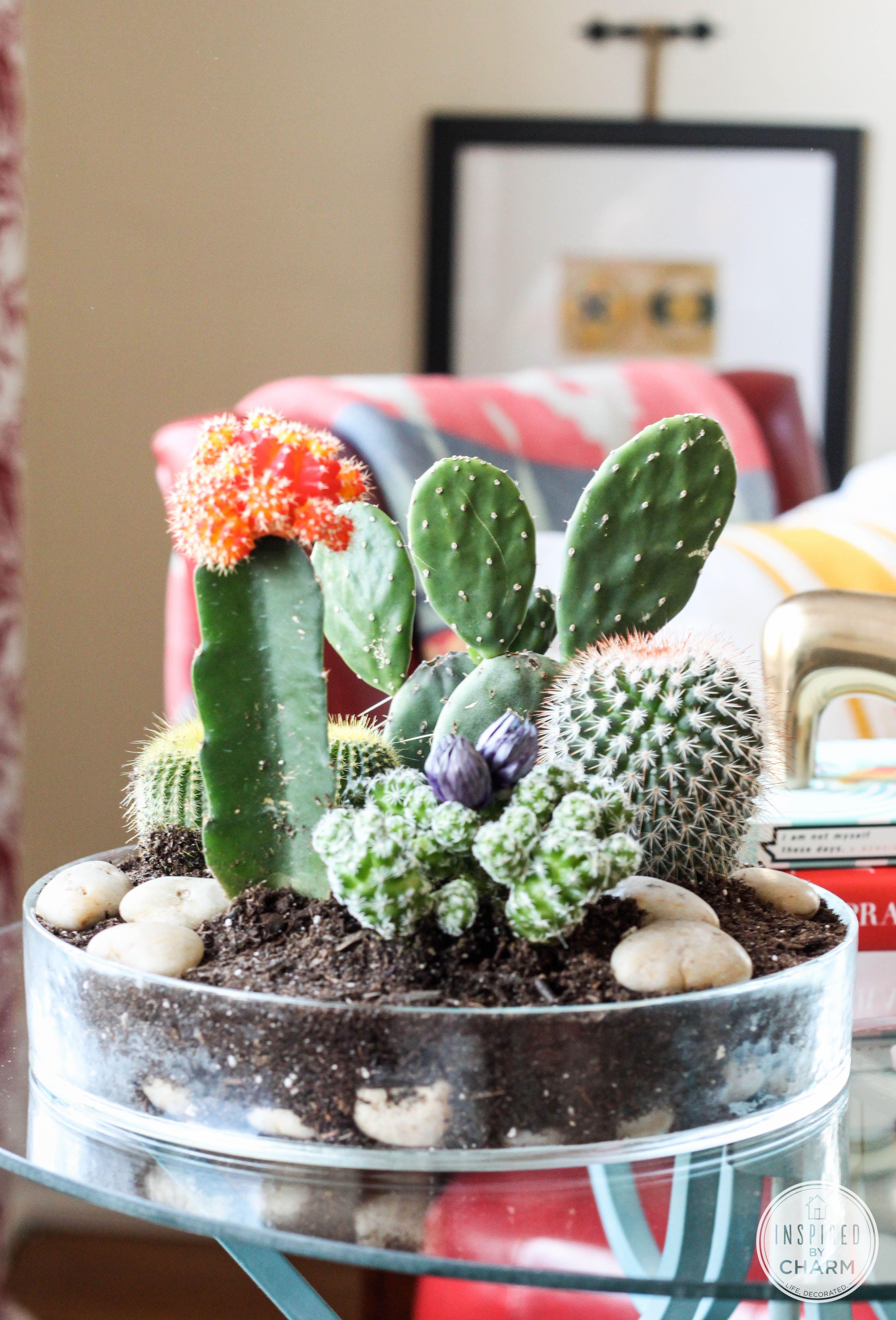 Photo of Tabletop Cactus Garden