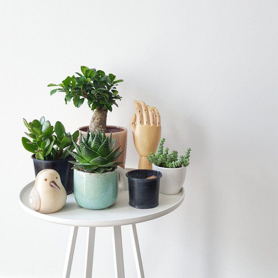 piepmatz' daheim | beistelltische, zimmerpflanzen und, Wohnzimmer dekoo