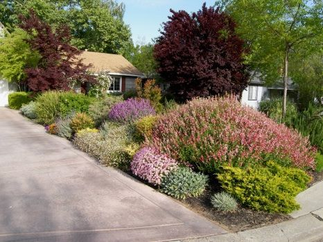 colorful drought resistant front yard with flowers and shrubs that need little to no water. Black Bedroom Furniture Sets. Home Design Ideas