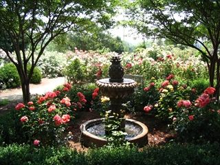 Marvelous The McGill Rose Garden U2013 North Carolina U2013 Reception And Ceremony Locations