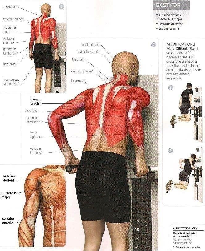 fondos de pecho triceps