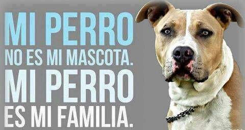 ¡¡¡EL MÁS IMPORTANTE!!!