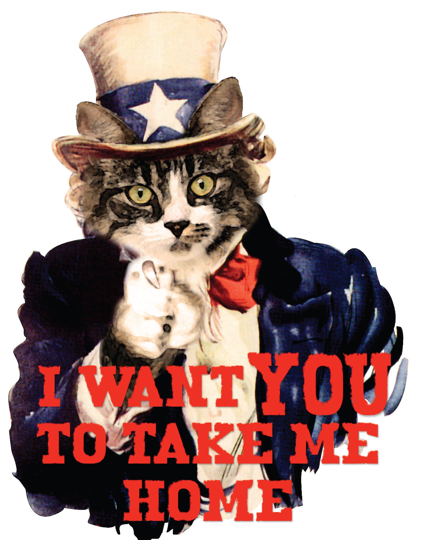 MHS Cat Independence Days (Görüntüler ile)