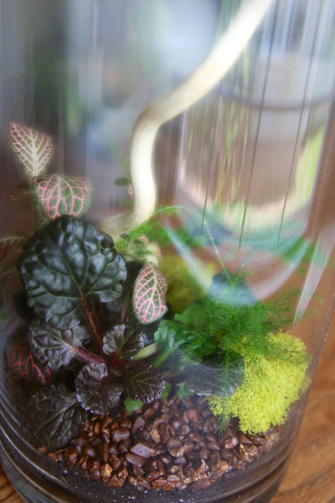 Tall Cylindrical Terrarium With Asparagus Fern Nerve